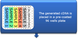 96-wells